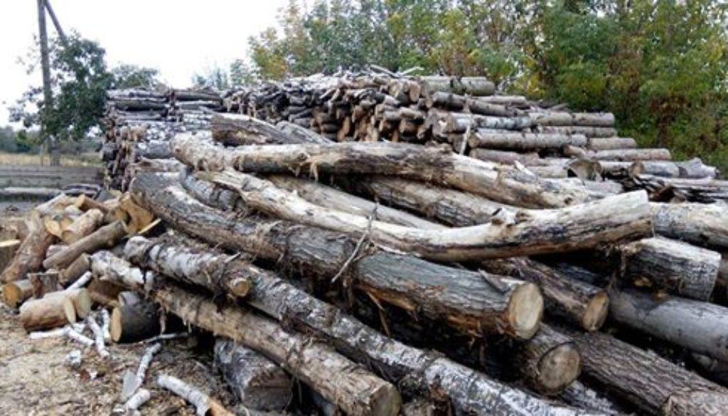 лісозаготівельні роботи