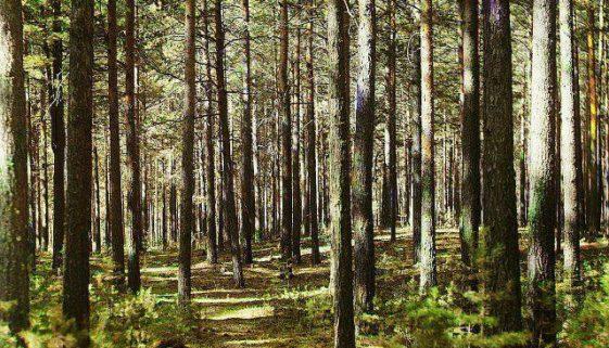 ліси обстеження