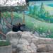 вольєр для ведмедів