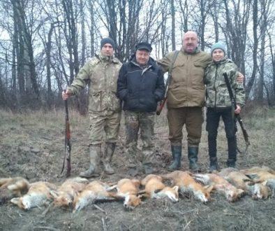 облавне полювання на лисів
